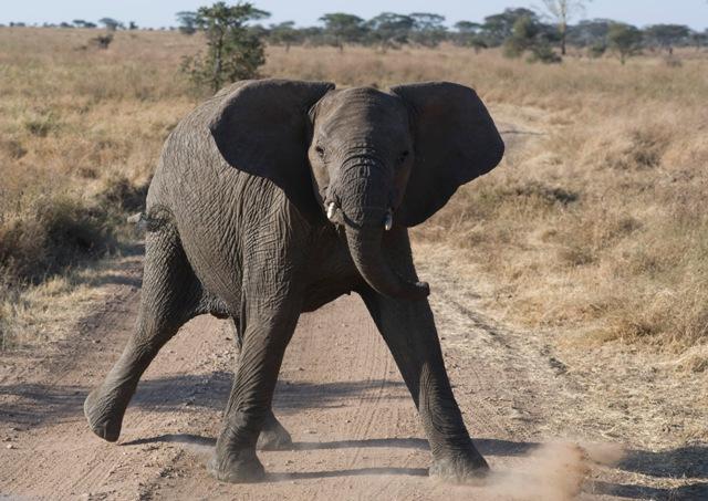 nairobi-to-victoria-falls-zambia