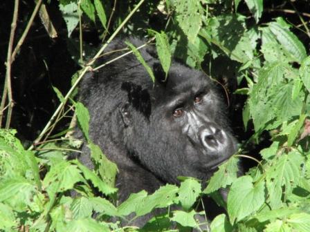 nairobi-to-gorillas-2013