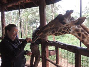 Girl hand feeding a giraffe in Nairobi, Kenya